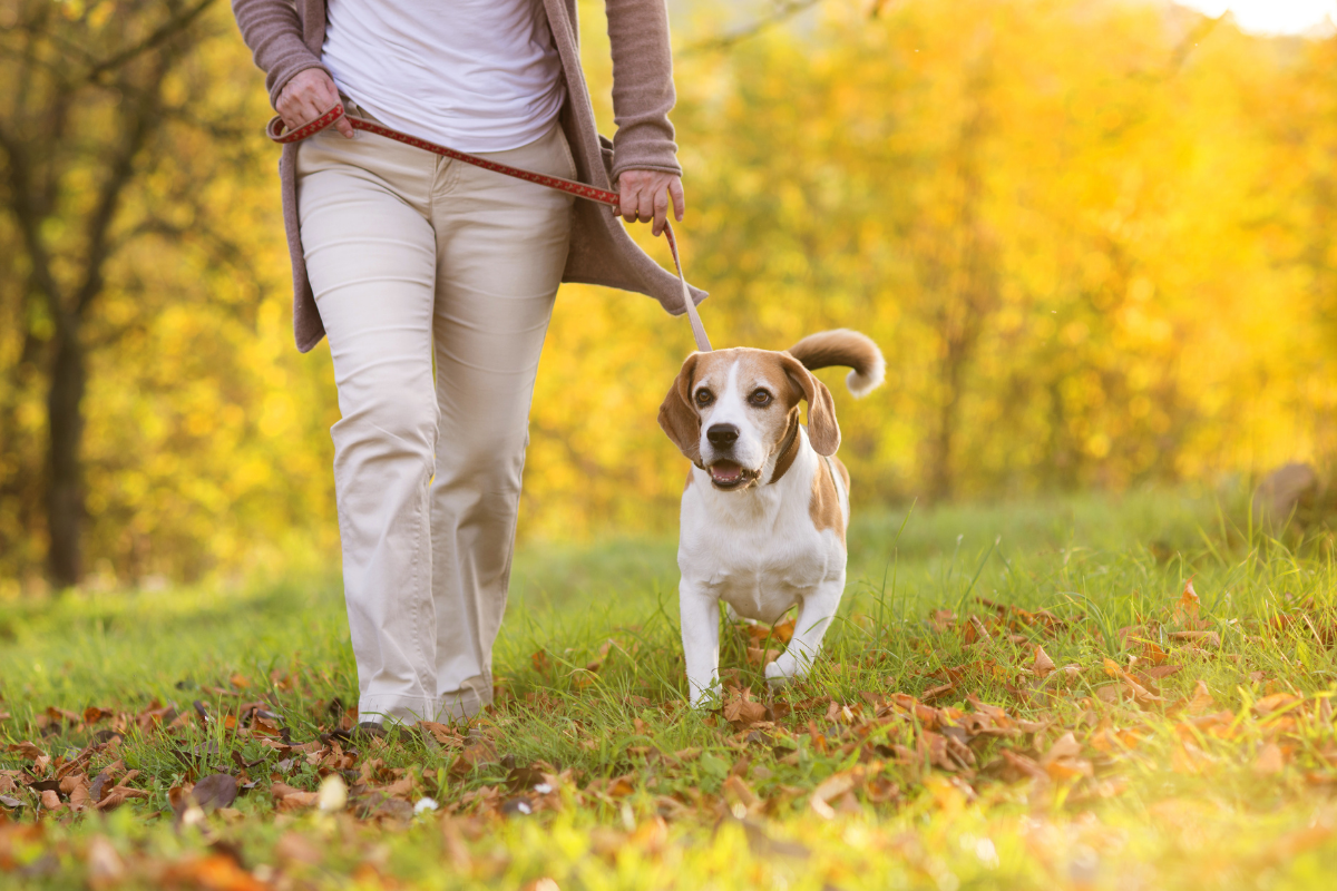 Dog friendly walking routes Lincoln